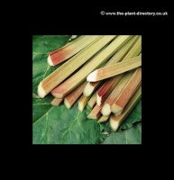 Rhubarb Victoria - Pack of 2 Crowns