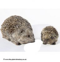 Hedgehog Baby - Garden Decoration