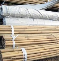 Bamboo Garden Canes - 2ft - 0.6m - pack of 20