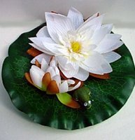 White Water Lily with Frog