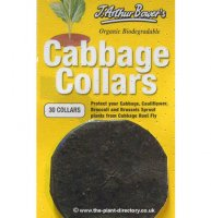 Cabbage Collars - pack of 30
