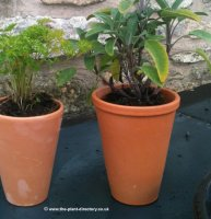 Terracotta Plant Pot - 4 inch Long Tom old style