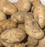 Maincrop Seed Potatoes - International Kidney - 10 tubers