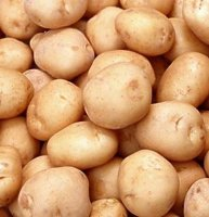 Early Seed Potatoes - Charlotte - 1kg
