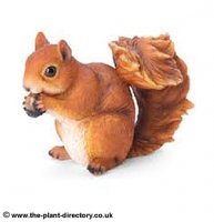 Red Squirrel Sat Up