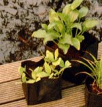 Pond Plant Baskets etc