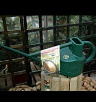 Haws Long Reach Watering Can - 8.8 litre - Green