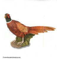 Pheasant - Garden Decoration