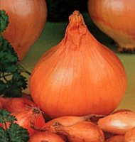Onion Sets - Sturon 250g