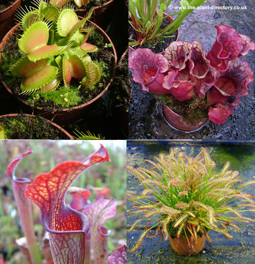 photos of carnivorous plants