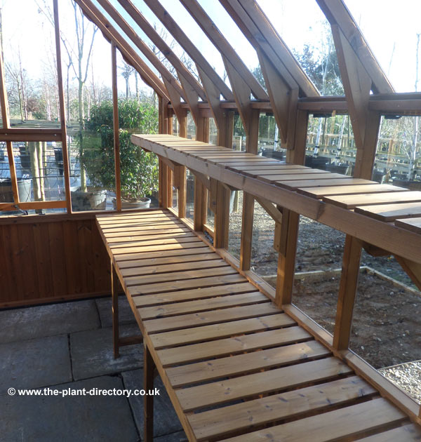 Victorian Timber Greenhouse with Safety Glass 10'7 x 8'3 - Click Image to Close